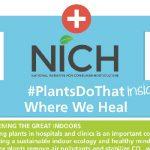 NICH PLANTS