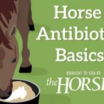 Horse Antibiotic Basics
