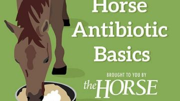 Horse Antibiotic Basics [InfoGraphic]